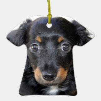 Mirada del perrito del Dachshund adelante al amor Adornos