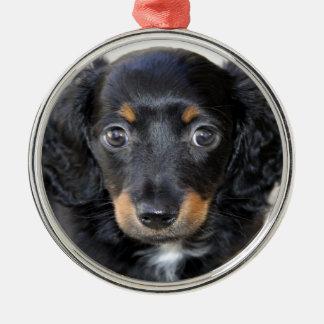 Mirada del perrito del Dachshund adelante al amor Ornamentos De Navidad