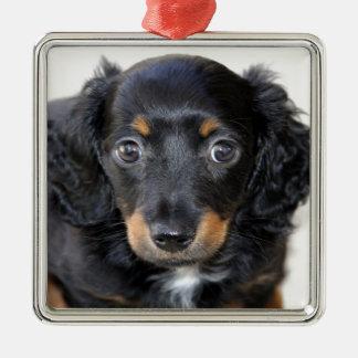 Mirada del perrito del Dachshund adelante al amor Ornamento Para Reyes Magos