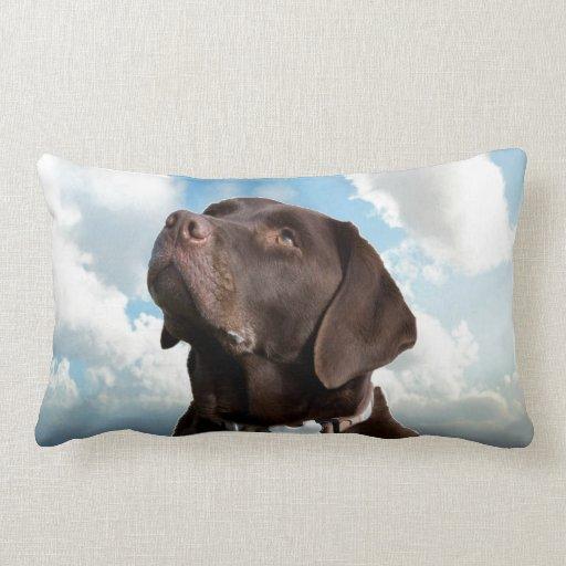 mirada del perro de Labrador adelante para amar al Almohadas
