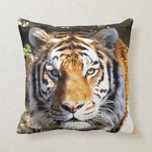 Mirada del tigre de Amur adelante a la paz y al am Cojin