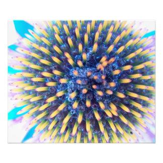 Mirada en la flor del cono cojinete