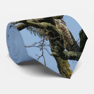 Mirada en un halcón de peregrino majestuoso corbatas personalizadas