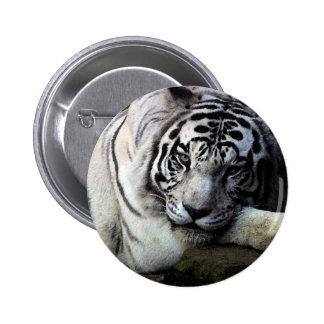 Mirada fija blanca del tigre pins