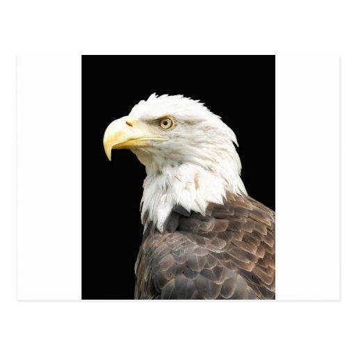 Mirada fija de Eagles Tarjeta Postal