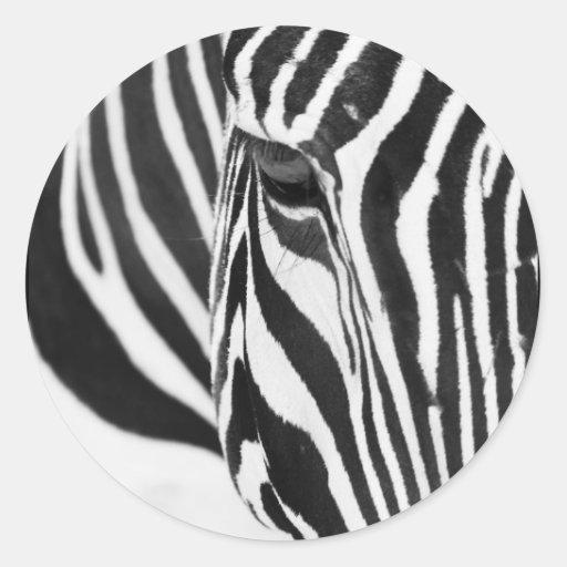 Mirada fija de la cebra etiquetas
