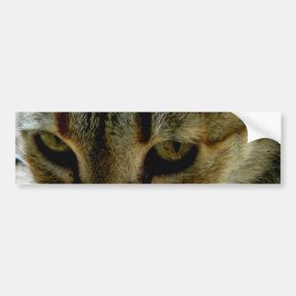 Mirada fija de los ojos de gato etiqueta de parachoque