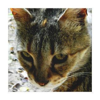 Mirada fija de los ojos de gato impresiones en lona