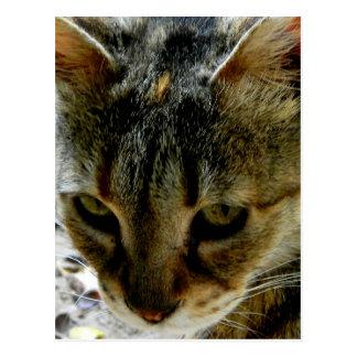 Mirada fija de los ojos de gato tarjetas postales