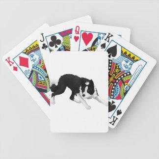 Mirada fija del border collie baraja de cartas