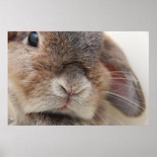 Mirada fija del conejito (impresión) impresiones