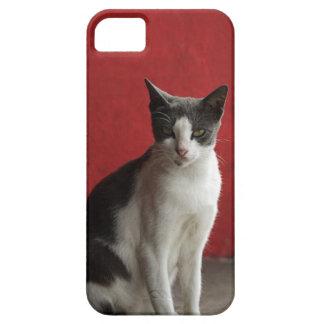 Mirada fija del gato iPhone 5 funda
