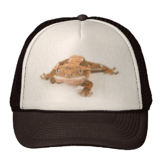 Mirada fija del Gecko Gorra