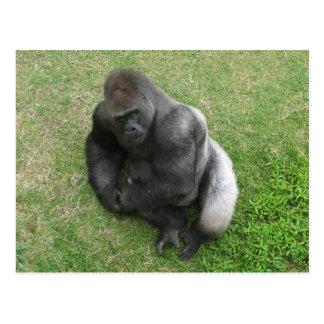 Mirada fija del gorila tarjeta postal