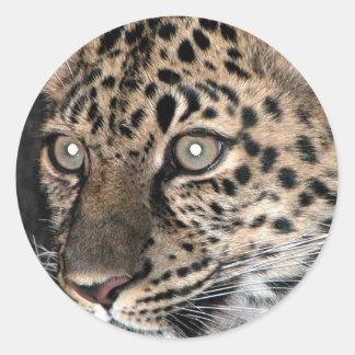 Mirada fija del leopardo etiquetas redondas