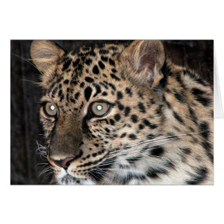 Mirada fija del leopardo felicitacion