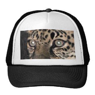 Mirada fija del leopardo gorra