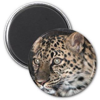 Mirada fija del leopardo imanes de nevera