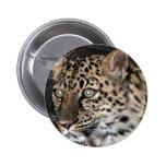 Mirada fija del leopardo pins