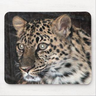 Mirada fija del leopardo tapete de ratón