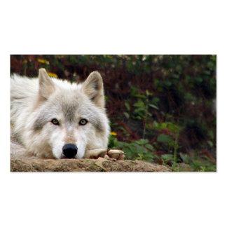Mirada fija del lobo de madera tarjetas de visita