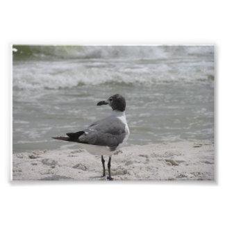 Mirada hacia fuera al mar cojinete