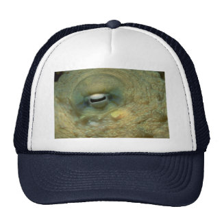 Mirada hermosa en el ojo de un pulpo del filón gorro