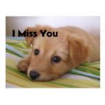 Mirada linda del perro de perrito postal