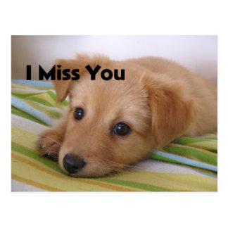 Mirada linda del perro de perrito tarjetas postales