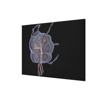 Mirada magnificada de un ganglio linfático impresión en lienzo