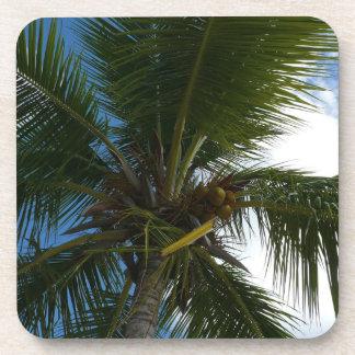 Mirada para arriba a la naturaleza tropical de la posavasos