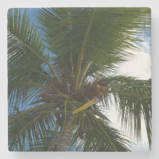 Mirada para arriba a la naturaleza tropical de la posavasos de piedra