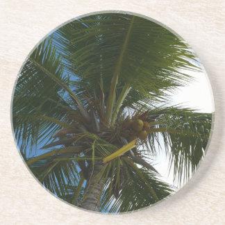Mirada para arriba a la naturaleza tropical de la posavasos personalizados