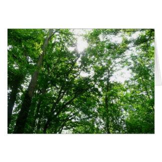 Mirada para arriba a los árboles del verano tarjeta de felicitación