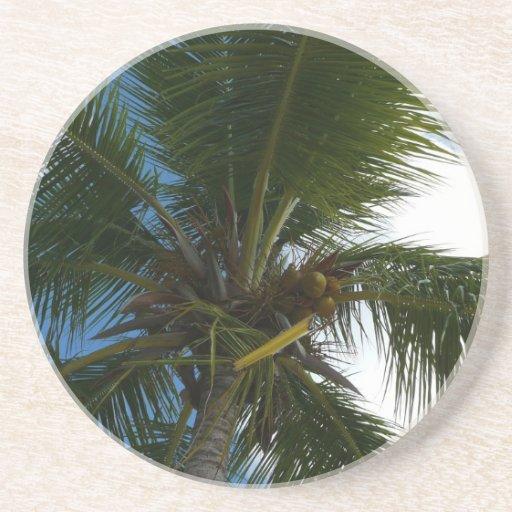 Mirada para arriba al práctico de costa de la palm posavasos para bebidas