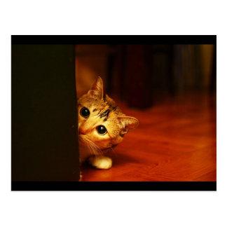 mirada que se escabulle del gato del gatito cute_f tarjeta postal