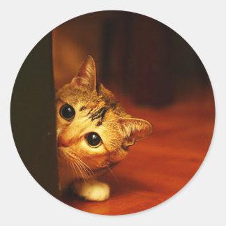 mirada que se escabulle del gato del gatito