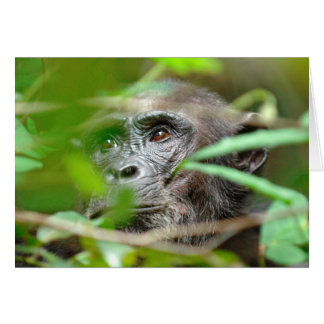 Mirada salvaje del chimpancé (trogloditas de la tarjeta de felicitación