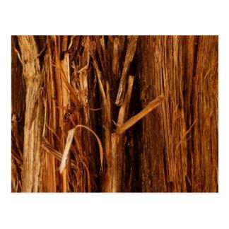 Mirada texturizada madera de la corteza del cedro postal