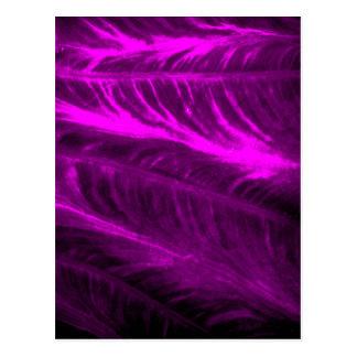 Mirada texturizada púrpura del oído de elefante postal