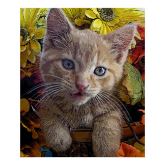 Mirada torpe del gato, gato del gatito del Tabby,  Posters