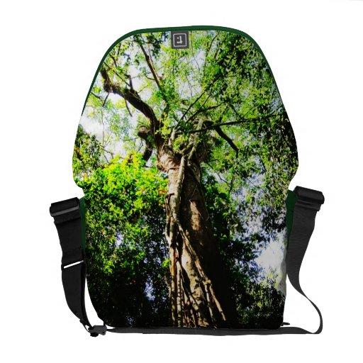 Mirando para arriba el árbol grande en el bosque - bolsas de mensajería