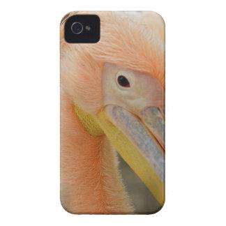 Mirándole caja de Blackberry del pelícano Funda Para iPhone 4 De Case-Mate