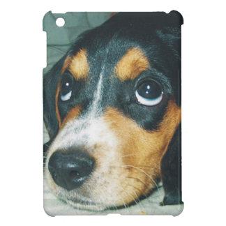 Mirándole perrito del beagle