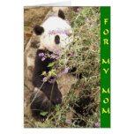 Mirar a escondidas a la mamá de la panda felicitaciones