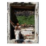 Mirar a escondidas el burro postales