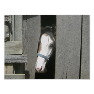 Mirar a escondidas el caballo fotografía