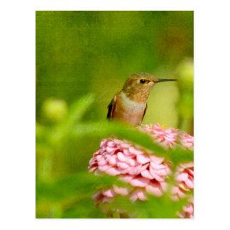 Mirar a escondidas el colibrí postales