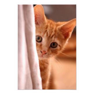 Mirar a escondidas el gatito fotografías