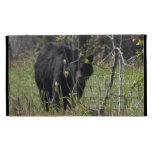 Mirar a escondidas el oso; Calendario 2013